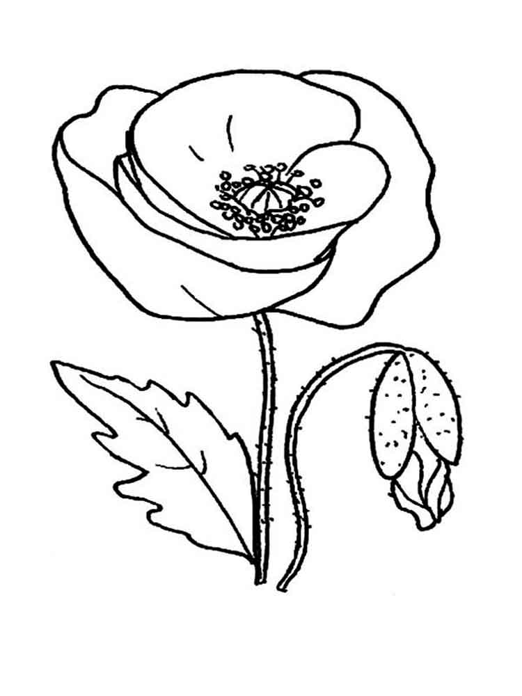 Poppy Flower coloring pages Download and print Poppy Flower
