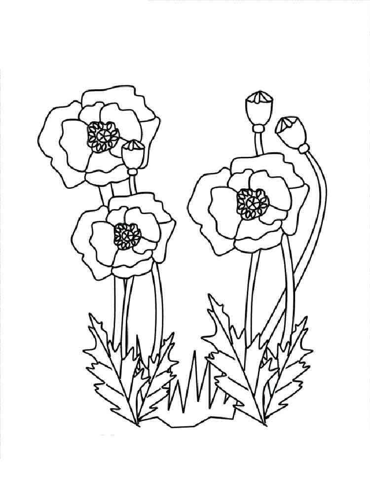 Blank Poppy Flowers Coloring Sheets Decoloring Az Sketch