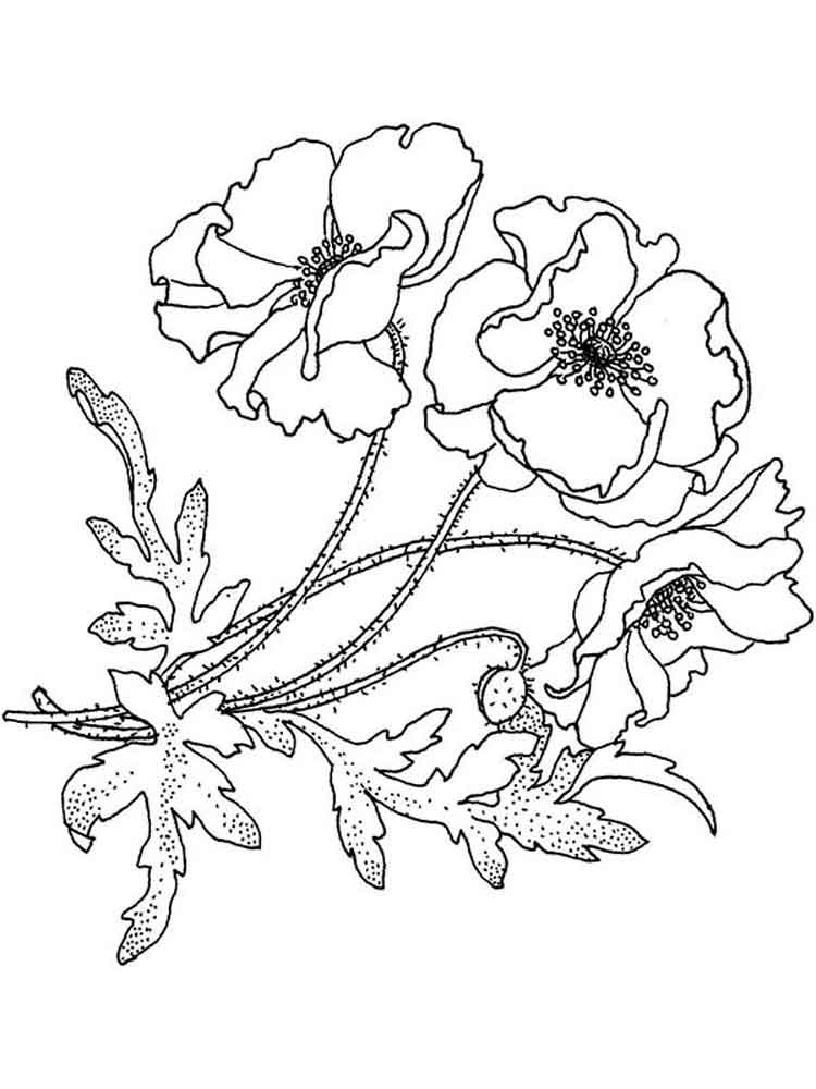 poppy flower coloring pages 17 - Poppy Flower Coloring Pages