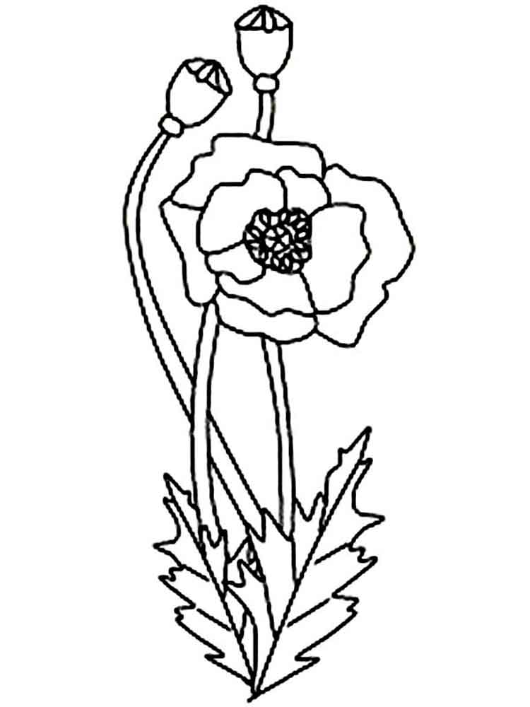 Poppy Flower coloring pages Download and print Poppy
