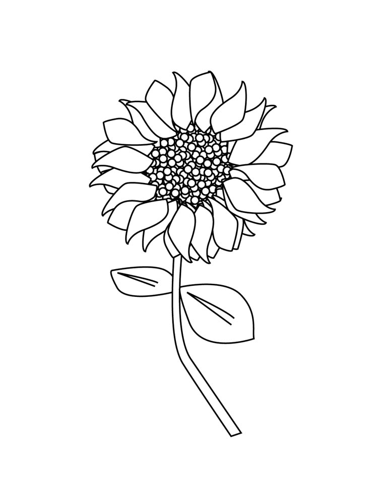 Sunflower coloring pages Download