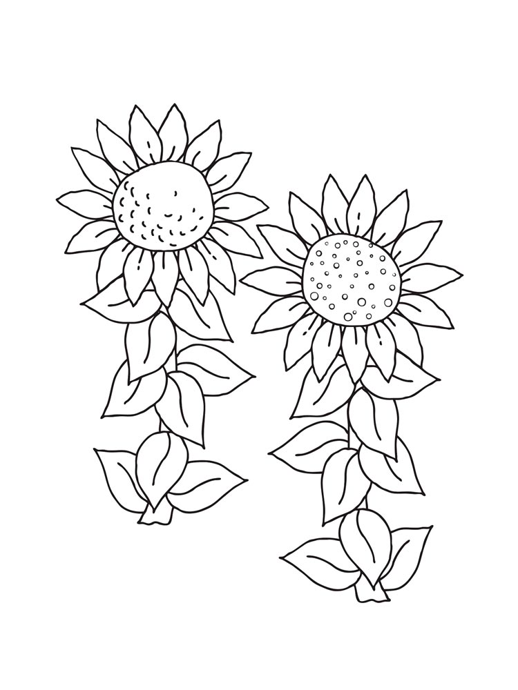Sunflower Flower Coloring Pages 5