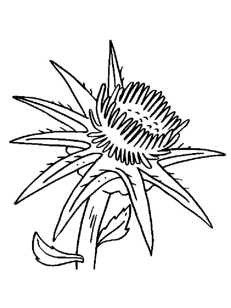 Thistle Flower coloring pages
