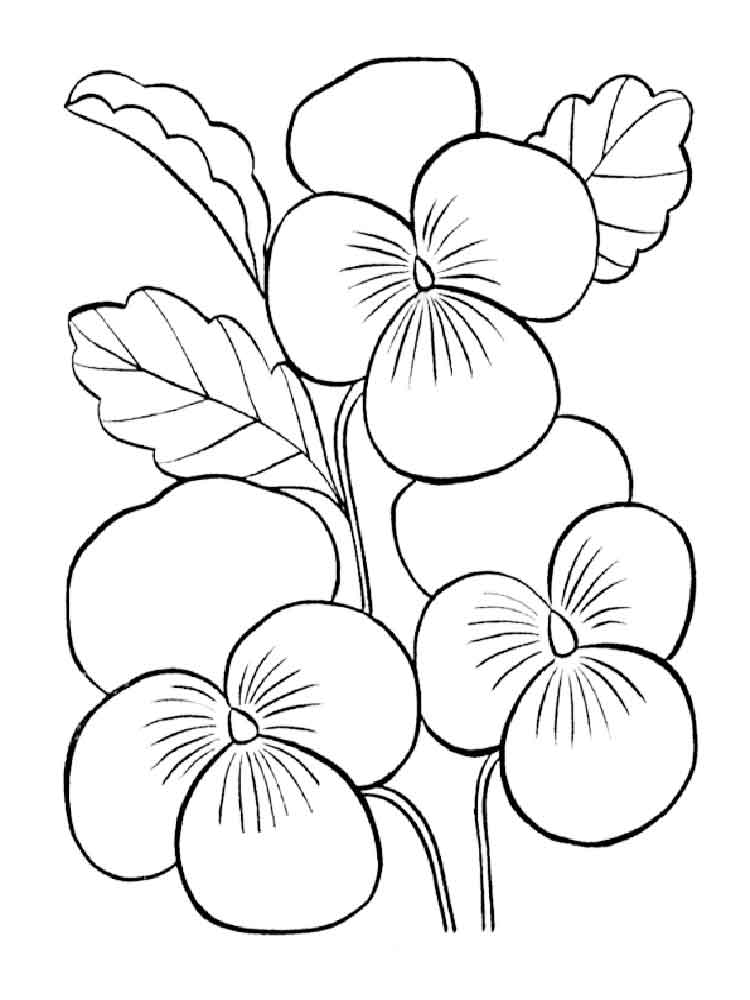 Violet coloring pages Download