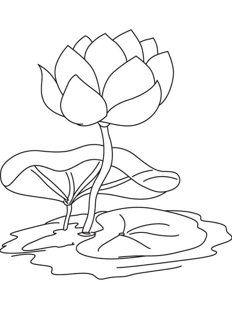 Water Lily Coloring Pages Download And Print Water Lily Coloring Pages