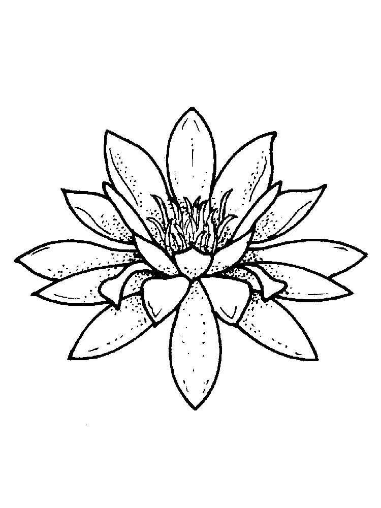 Water lily coloring pages Download