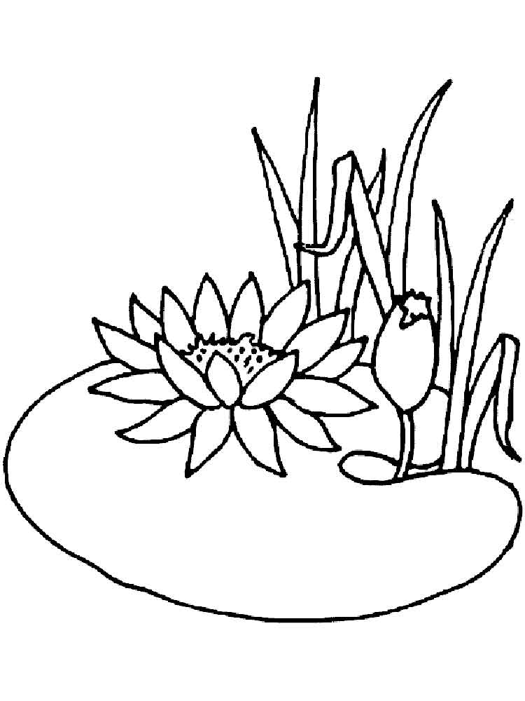 Water lily coloring pages. Download and print Water lily coloring ...