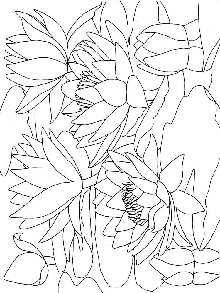 Printable Lily Pad Coloring Page To Print Free Large Size