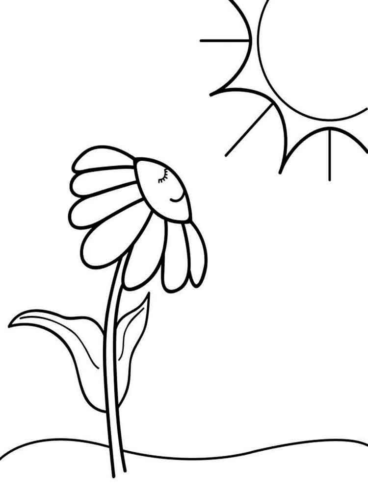 Chamomile Flower Coloring Pages 12