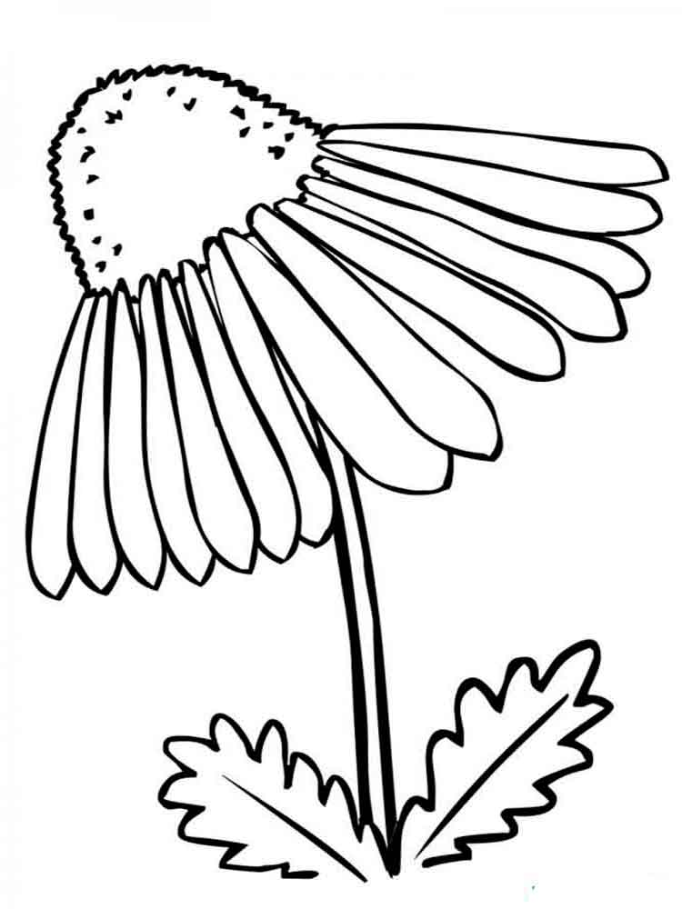 Crocus Flower Coloring Pages Coloring Pages