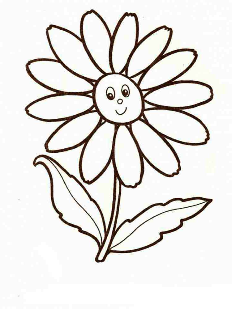 Chamomile Flower coloring pages. Download and print ...