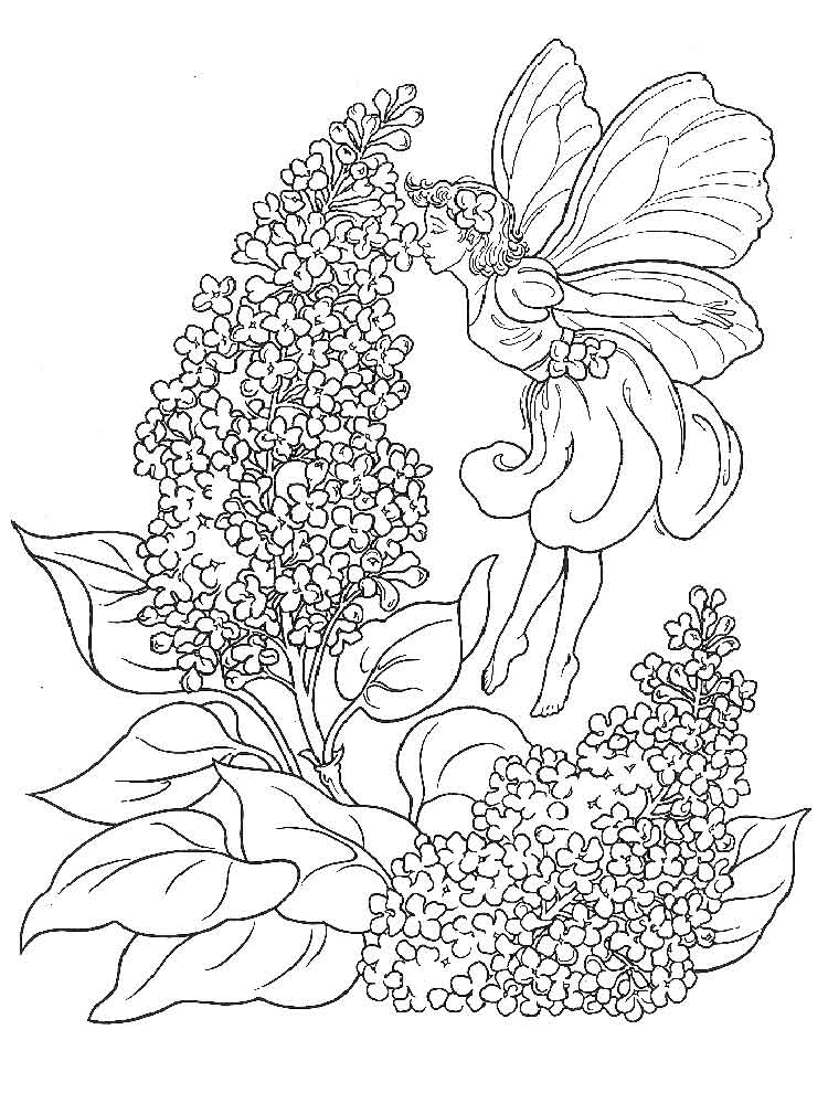 Lilac Flower coloring pages Download