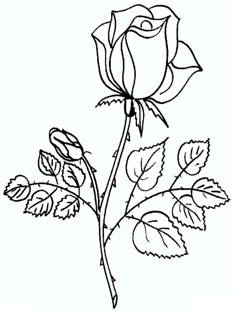 printable rose coloring pages - rose coloring pages download and print rose coloring pages