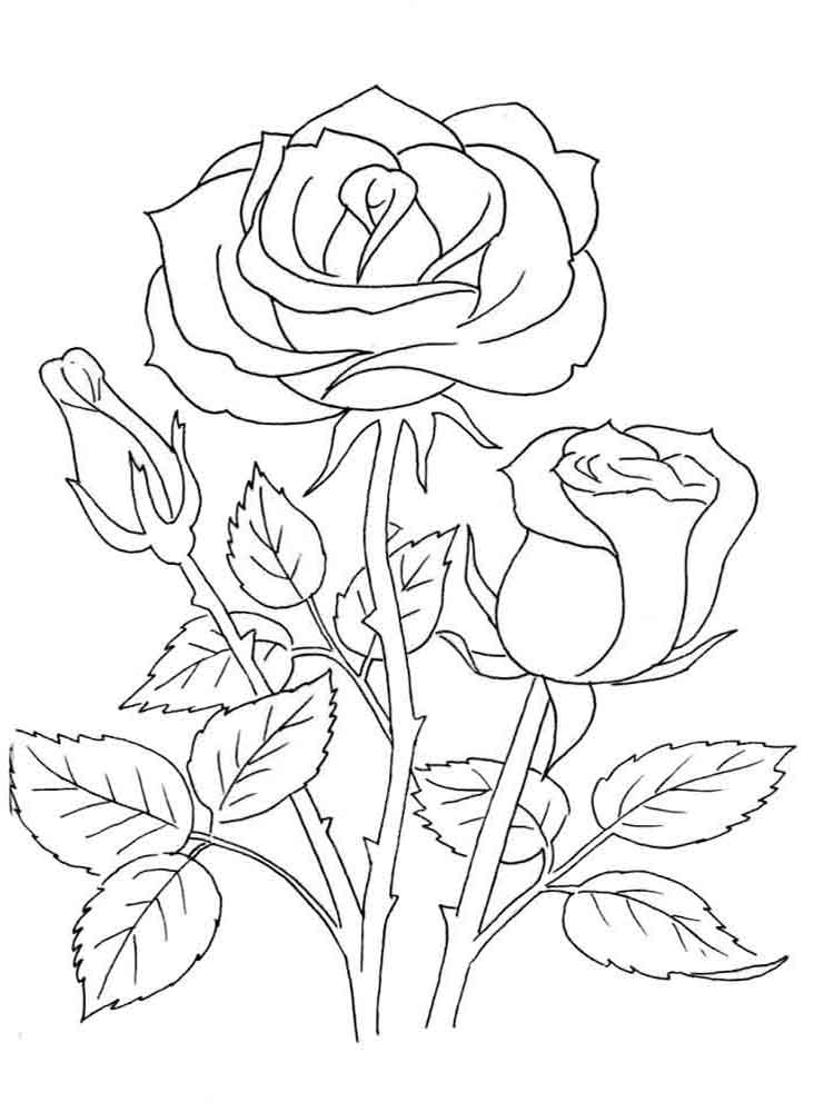 Rose coloring pages download and print rose coloring pages for Rose color pages