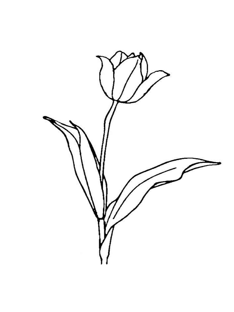 Tulip coloring pages. Download and print Tulip coloring pages