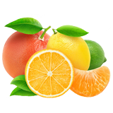 Citrus Fruit coloring pages
