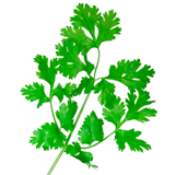 Parsley coloring pages