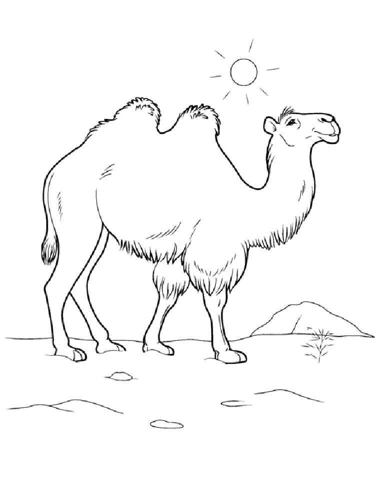 Desert coloring pages. Download and print Desert coloring ...