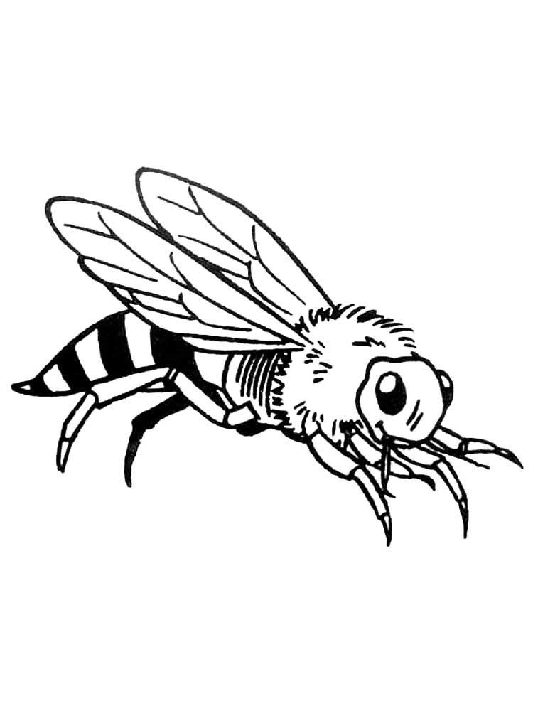Insect Coloring Pages Download And Print Insect Coloring
