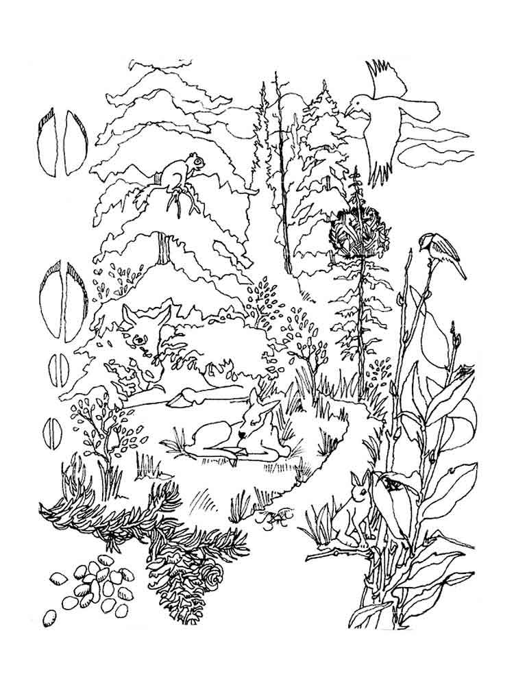 Forest coloring pages. Download and print forest coloring ...