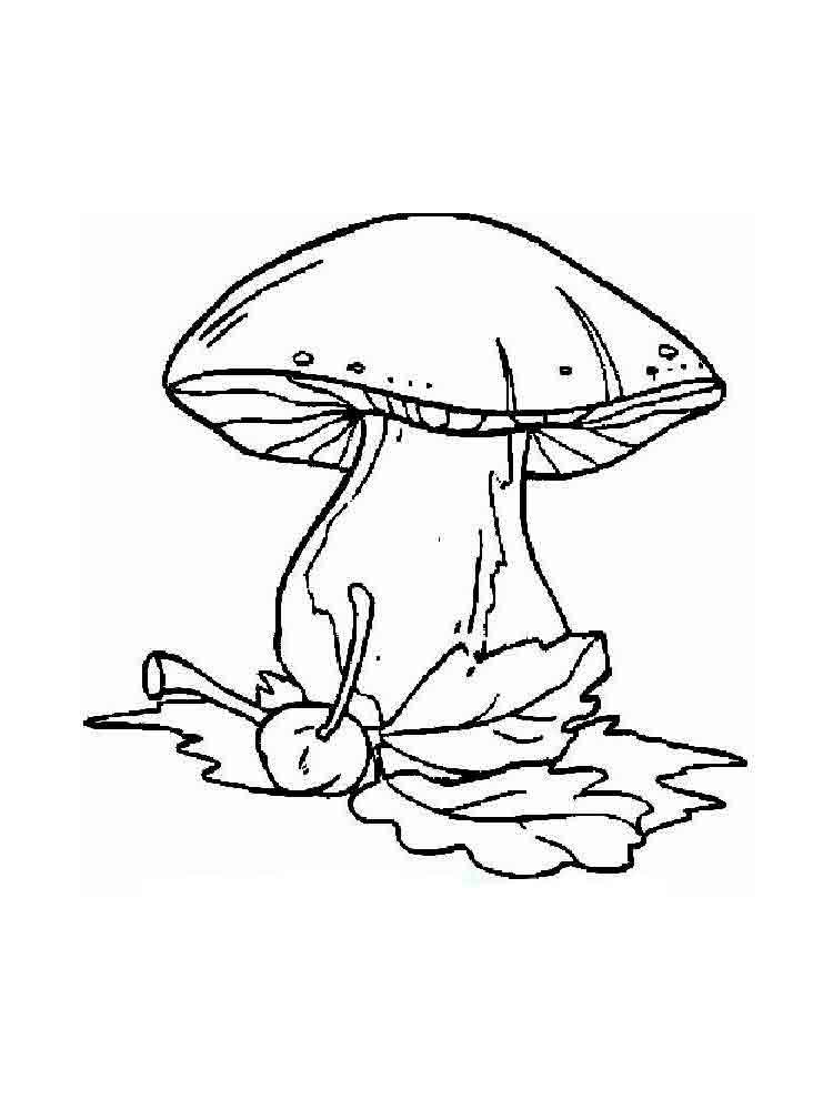 mushrooms coloring pages download and print mushrooms