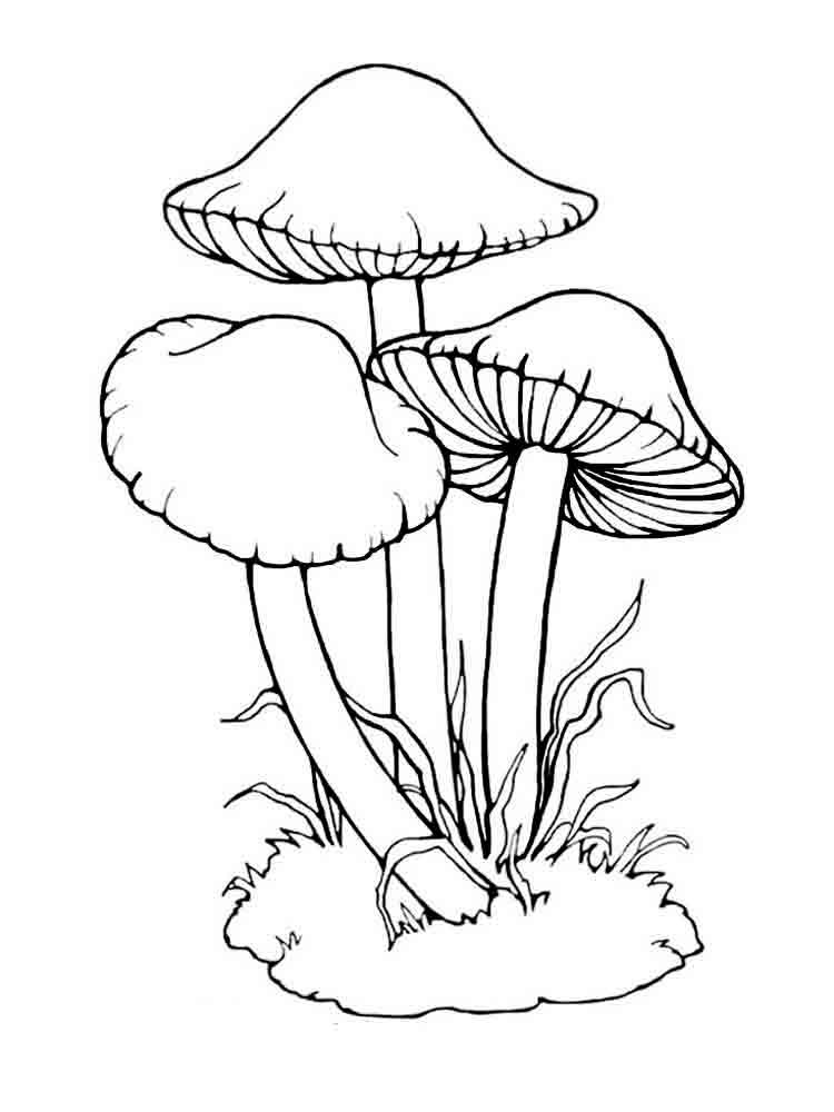 Mushrooms Coloring Pages Download And Print Mushrooms