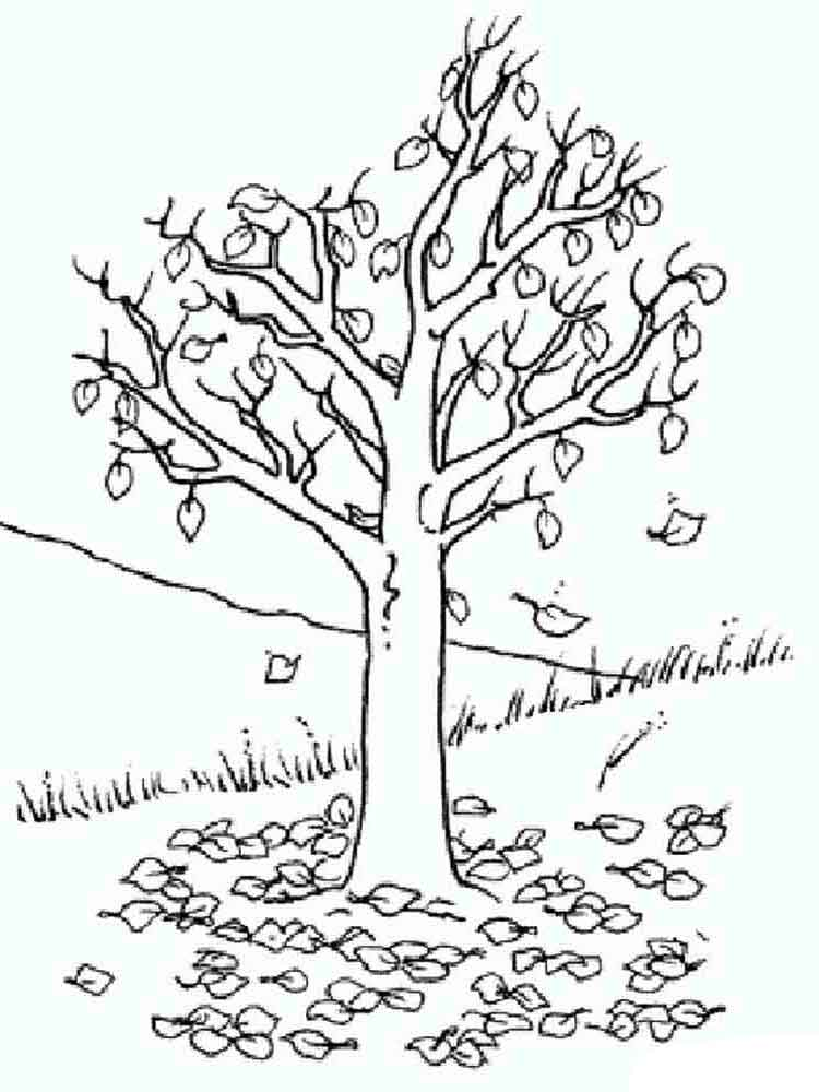 tree coloring pages 10 - Birch Tree Branches Coloring Pages