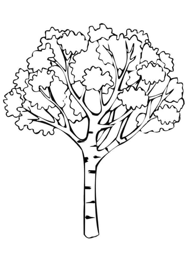 tree coloring pages 11 - Birch Tree Branches Coloring Pages