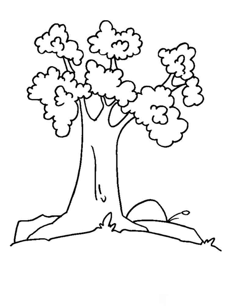 tree coloring pages 12 - Birch Tree Branches Coloring Pages