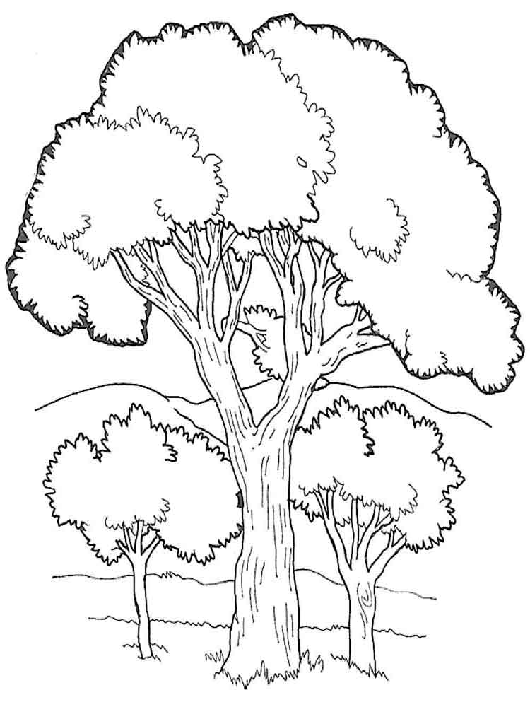 Trees coloring pages. Download and print trees coloring pages