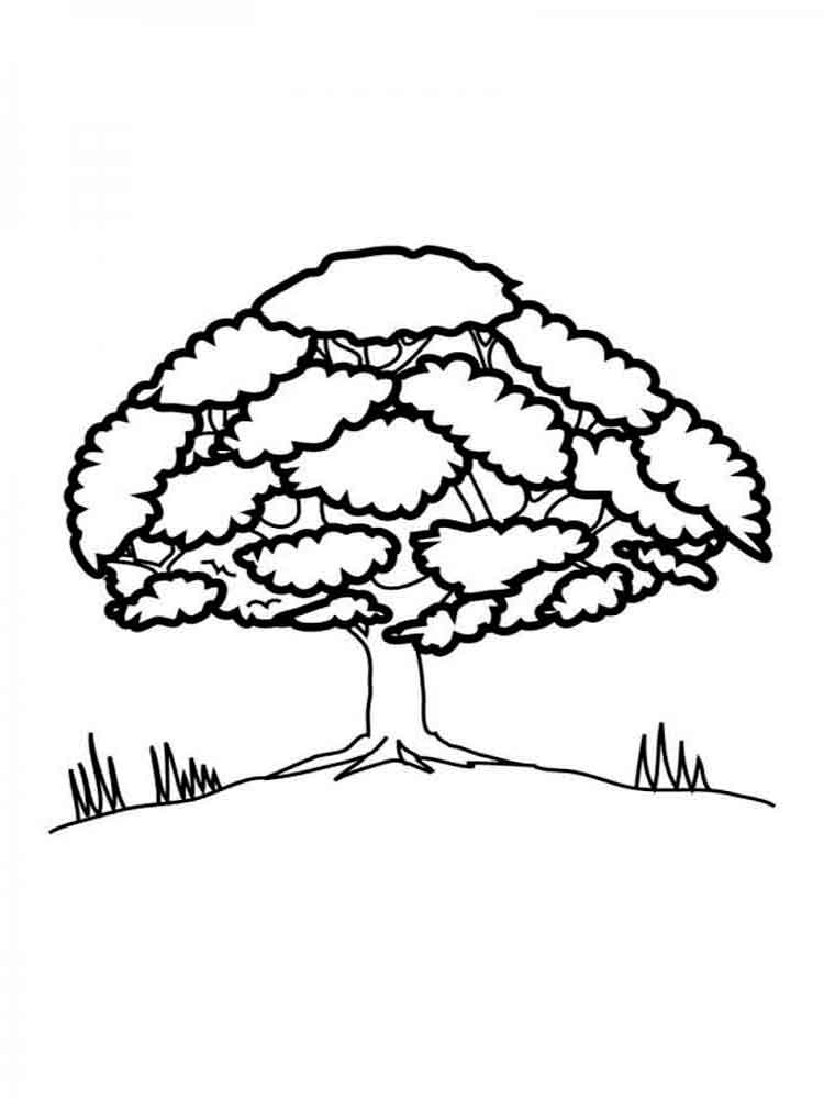 tree coloring pages 15 - Birch Tree Branches Coloring Pages