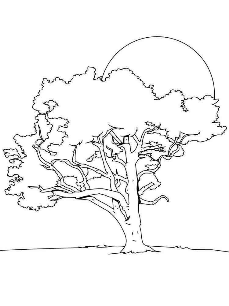 tree coloring pages 17 - Birch Tree Branches Coloring Pages