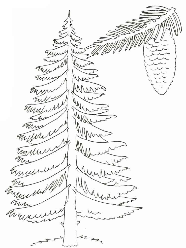 раскраска дерево ель с шишками