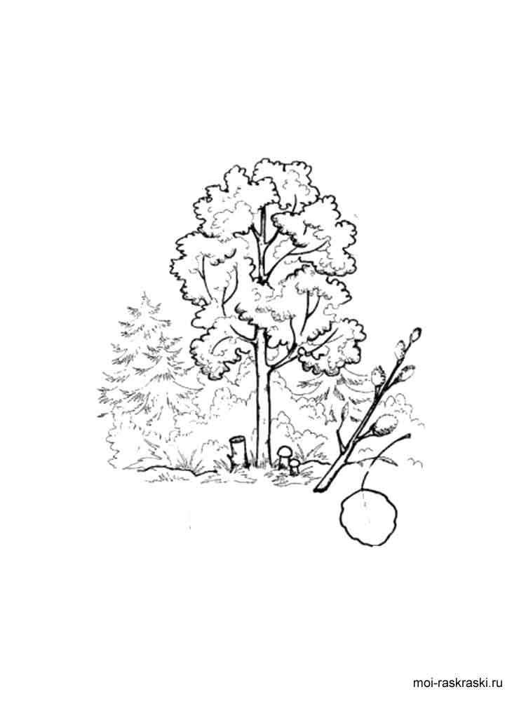 Aspen Tree coloring pages for kids