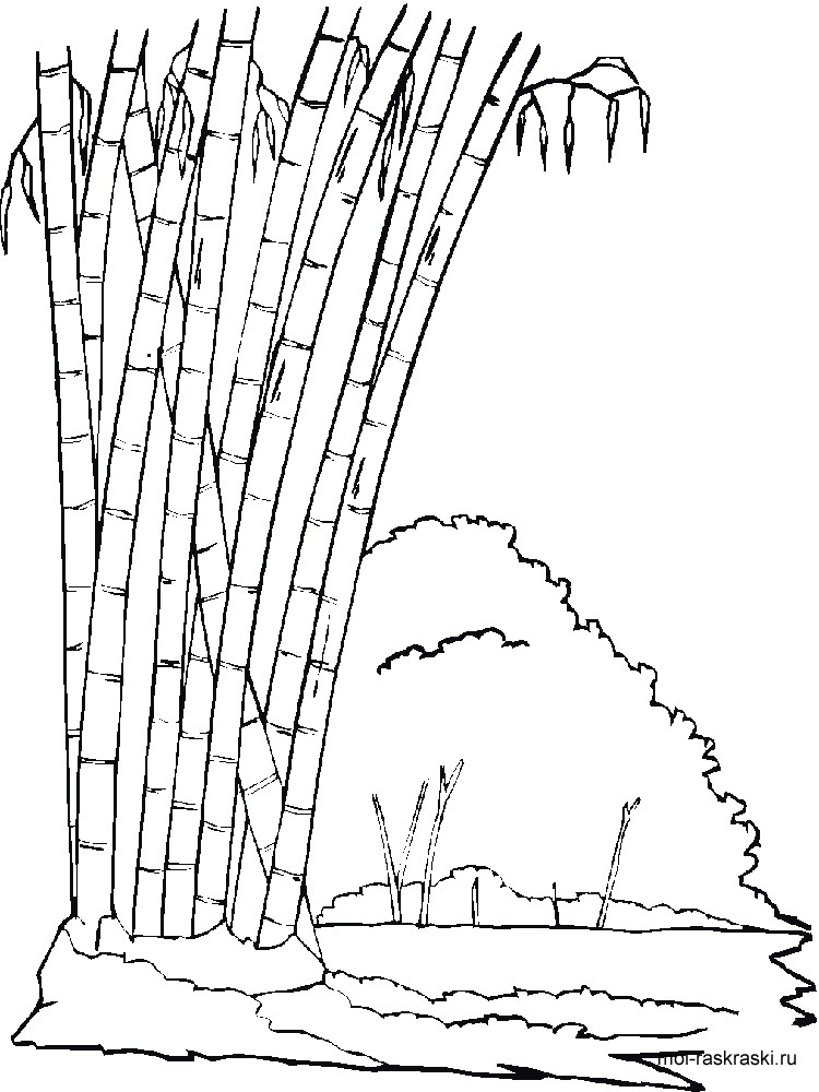 Bamboo coloring pages for kids