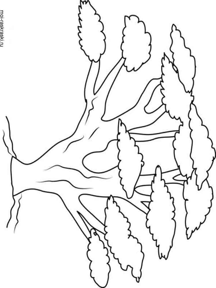 baobab tree coloring pages 2 - Trees Coloring Pages