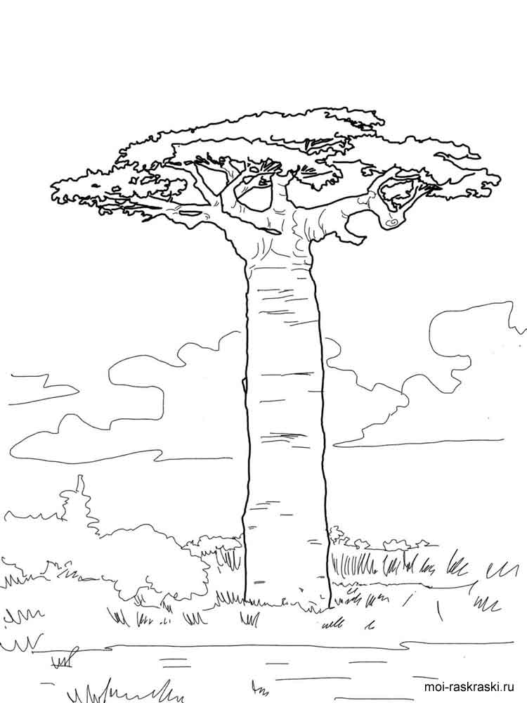 Baobab Tree coloring pages for kids Free Printable Baobab