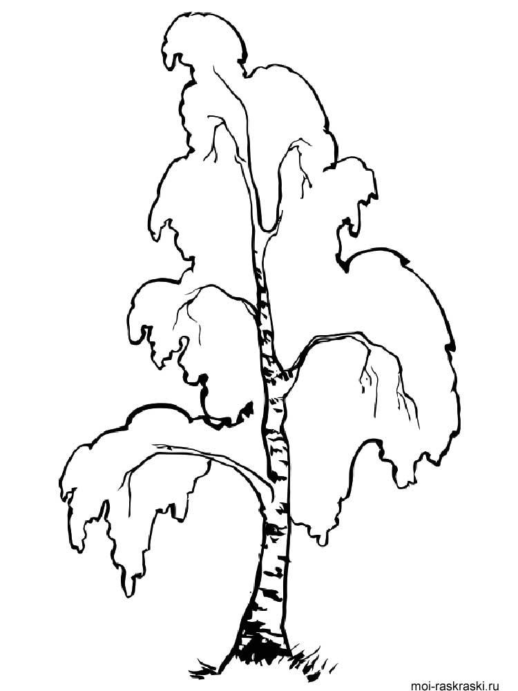 Birch Tree coloring pages for kids Free Printable Birch