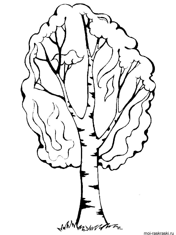 fall leaf hornbeam coloring page pagefull size image birch leaf coloring page
