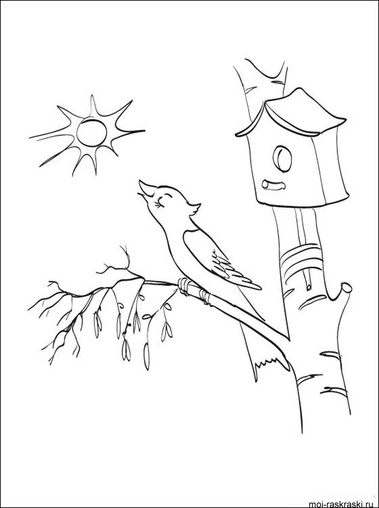 birch tree branches coloring pages click the american white coloring page of a tree branch