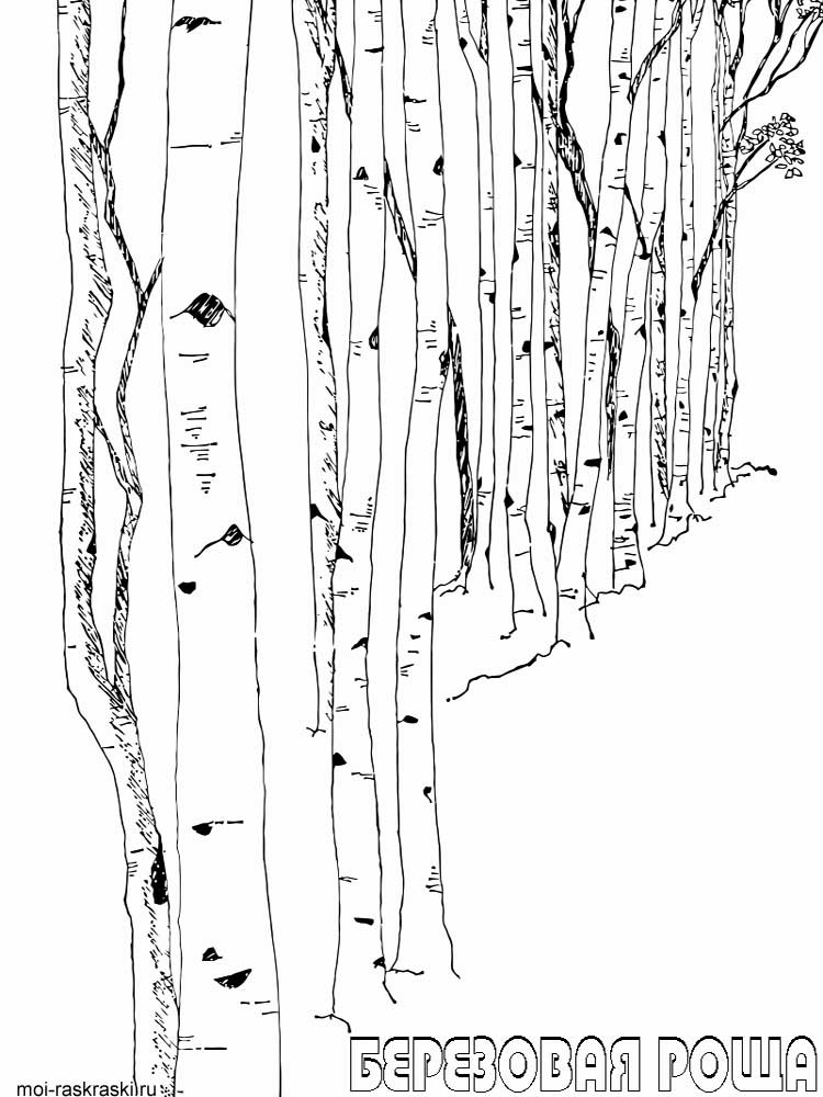birch tree coloring pages 3 - Birch Tree Branches Coloring Pages