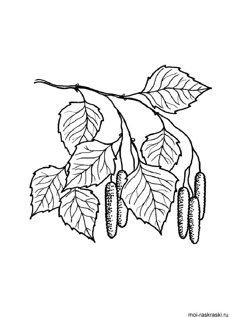 birch tree coloring pages 5 - Birch Tree Branches Coloring Pages