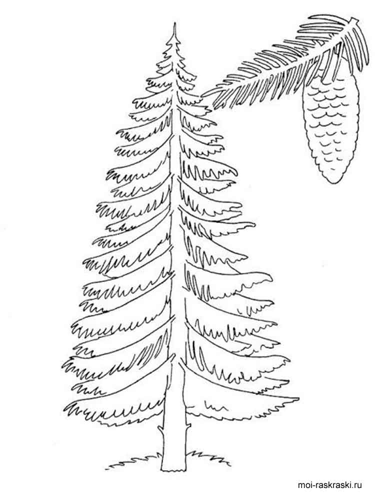 california redwood coloring pages - photo#28
