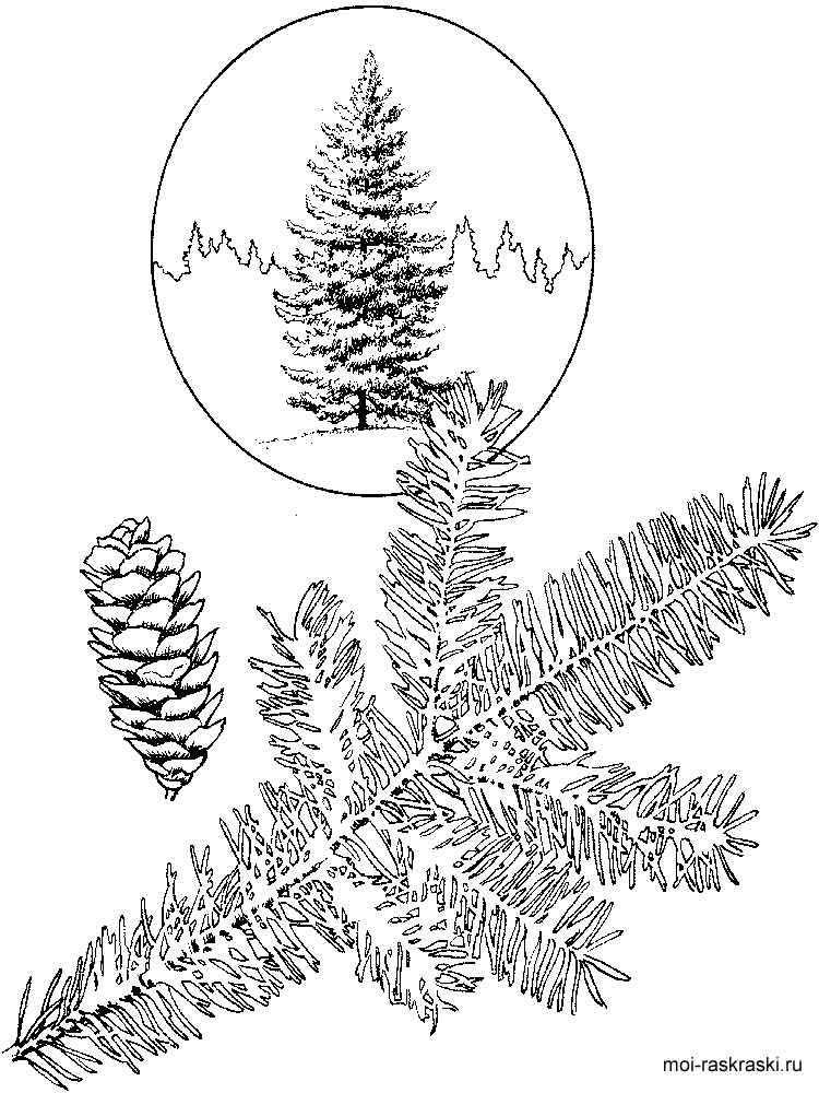 Fir Tree coloring pages for kids Free Printable Fir Tree