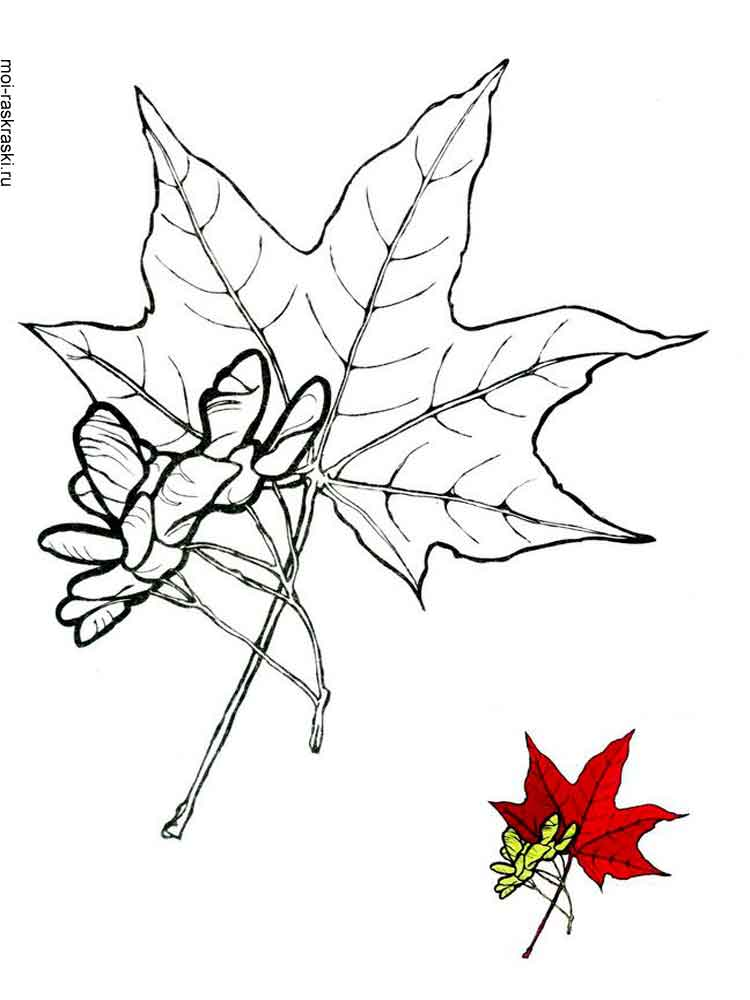 maple tree coloring pages - photo#22