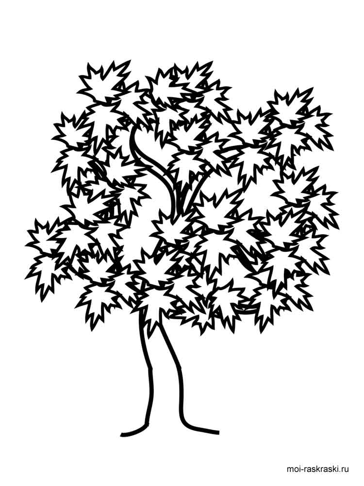 Maple Tree coloring pages for kids Free Printable Maple
