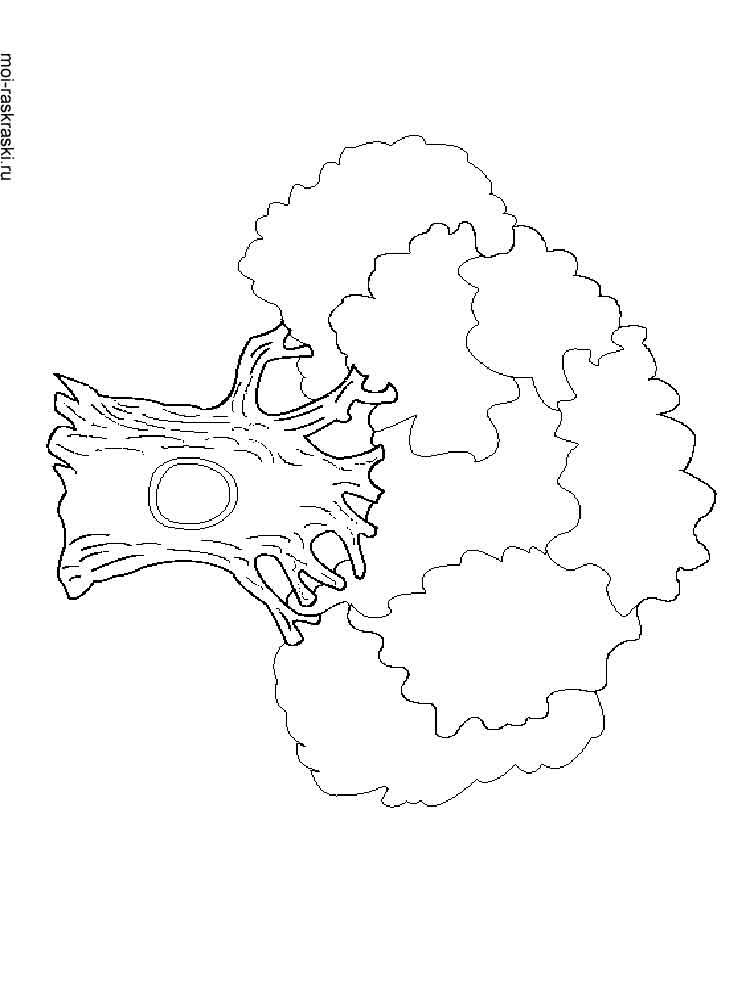 free oak tree coloring pages - photo#31