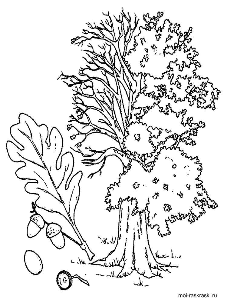 Oak Tree coloring pages for kids Free Printable Oak Tree