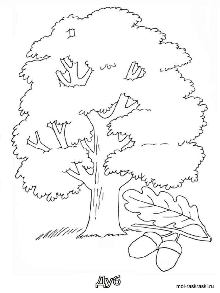 Oak Tree coloring pages for kids