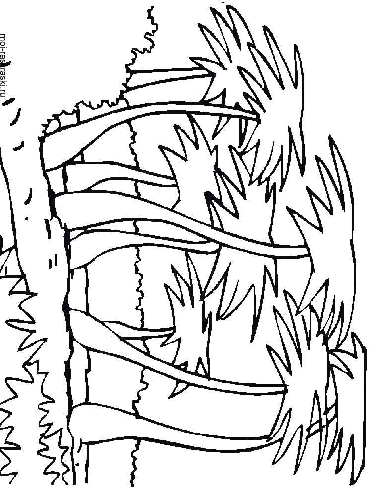 palm tree pictures coloring pages - photo#38